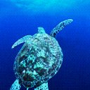 Grab A Shell Dude