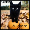 Happy Halloween - Black Kitten