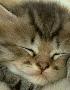 Kitten01