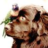 Parrot Dog
