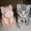 Piggy and Kitten 12 22
