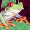 Tree Frog jpg