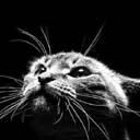 cat avatar 0143