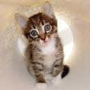 cat avatar 0221