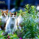cat avatar 0603