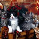 cat avatar 0653