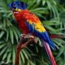 exotic animal avatar 0156