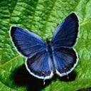 exotic animal avatar 0527