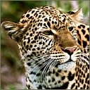 exotic animal avatar 1887