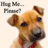 hug me please dog