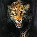 tigers lions avatars 0059