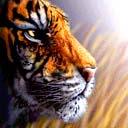 tigers lions avatars 0418