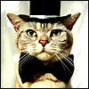 https://www.avatarstock.com/img/Groom-cat_8295.jpg